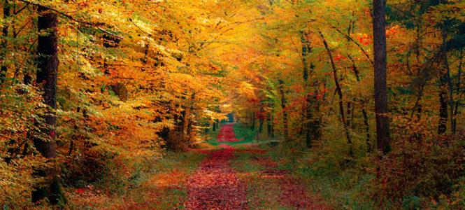 Юмор: Планы на осень…